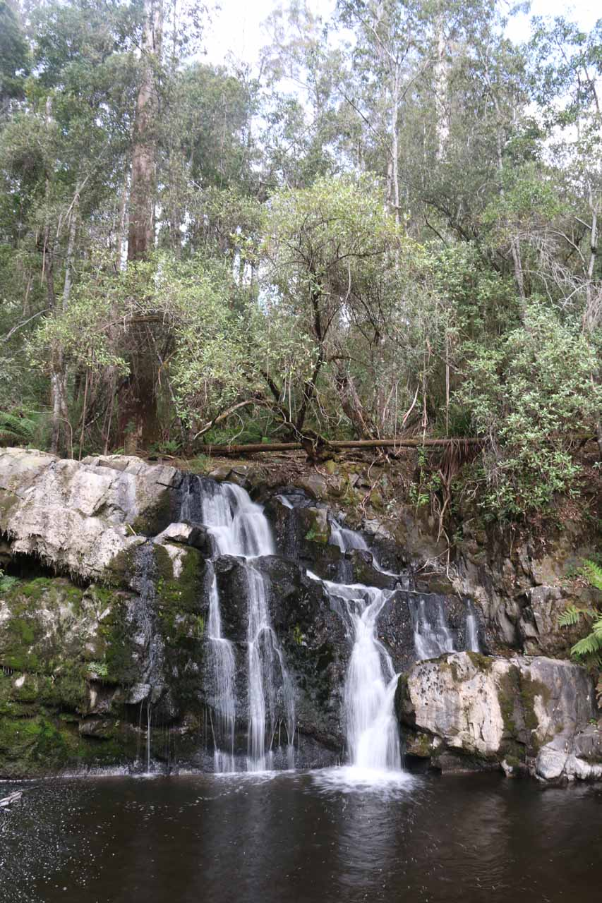 Checking out the Upper Lilydale Falls