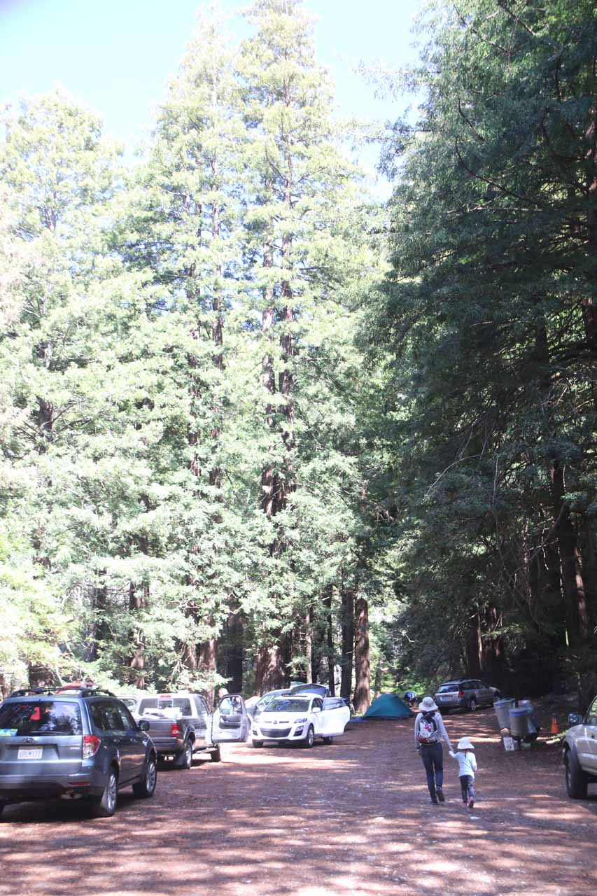 Walking past a campground with coastal redwoods towering over the scene