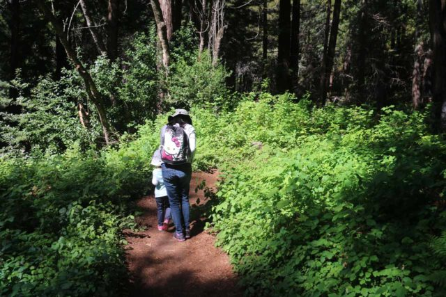 Limekiln_019_04022015 - Julie keeping Tahia close as we hiked between a grove that could contain poison oak en route to the Limekiln Falls