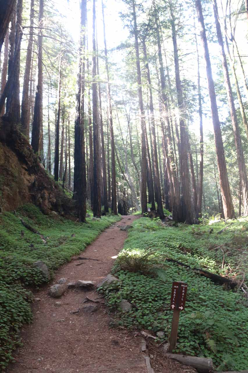 Continuing on the Kiln Trail after making my way back from Limekiln Falls