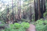Limekiln_116_04022015 - As I was hiking back from the Kiln Trail in April 2015, I started paying attention to the trees with black bark on them. This was evidence of the fire that swept through here preventing us from visiting back in 2010