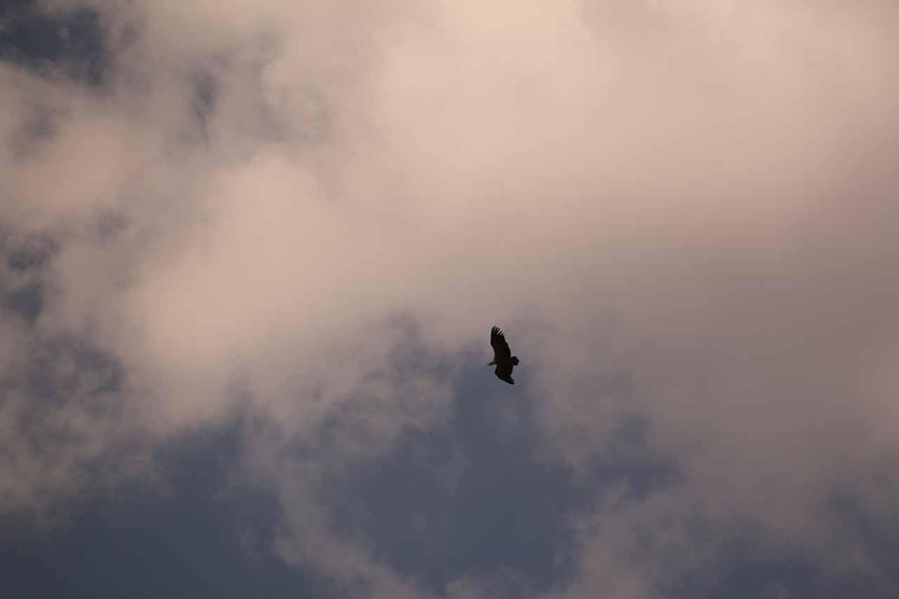 Looking up at eagles or condors flying overhead near Cascada de Linarejos