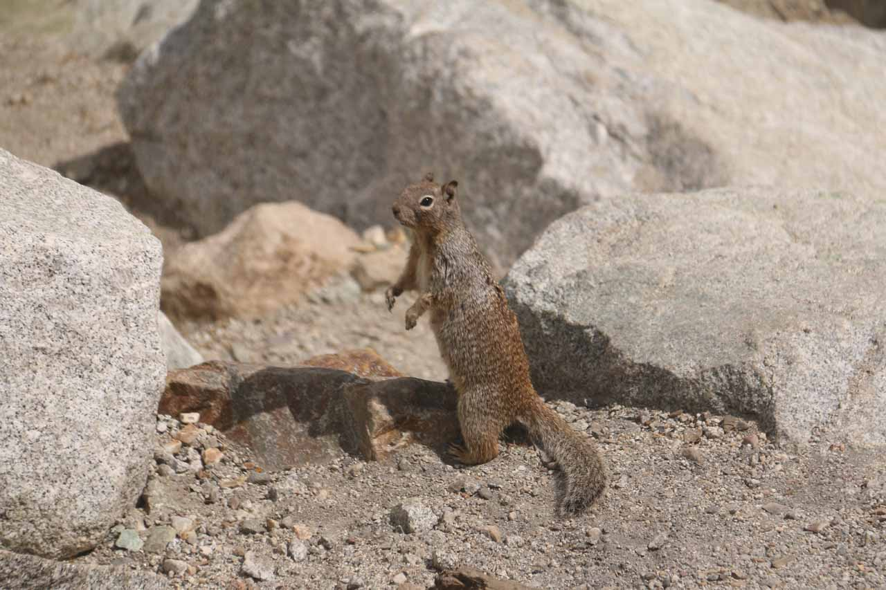 This squirrel was one of many who were around Lisa Falls probably looking for something to munch on