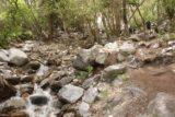 Lisa_Falls_052_05262017 - Looking back up along the creek downstream from Lisa Falls