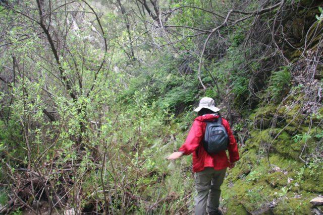 Little_Falls_037_03202010 - Julie making the final overgrown scrambling leading to the Little Falls