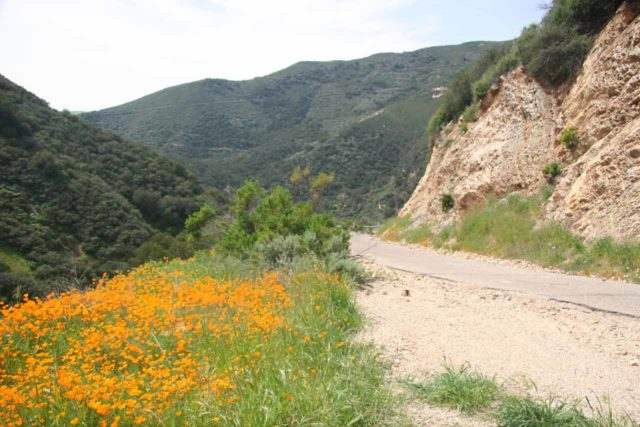 Little_Falls_047_03202010 - Context of the Waters End Road with California Poppies blooming right next to the road on our way to Upper Lopez Canyon and the Little Falls