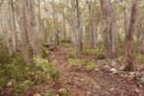 Lost_Falls_Tassie_011_11252017 - The track leading to the Lost Falls in Tassie