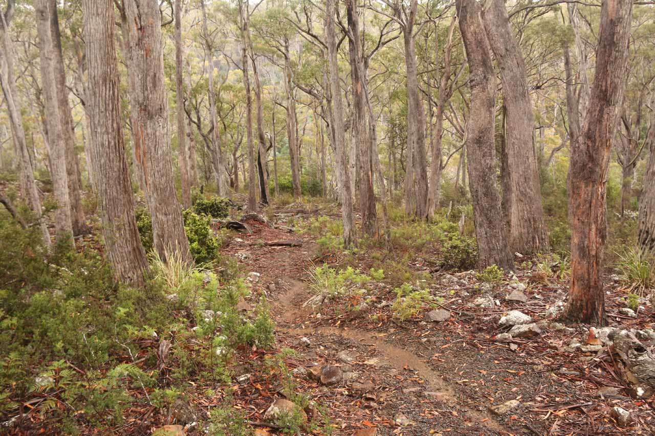 Following along the short track towards the rim of the gorge on the way to Lost Falls