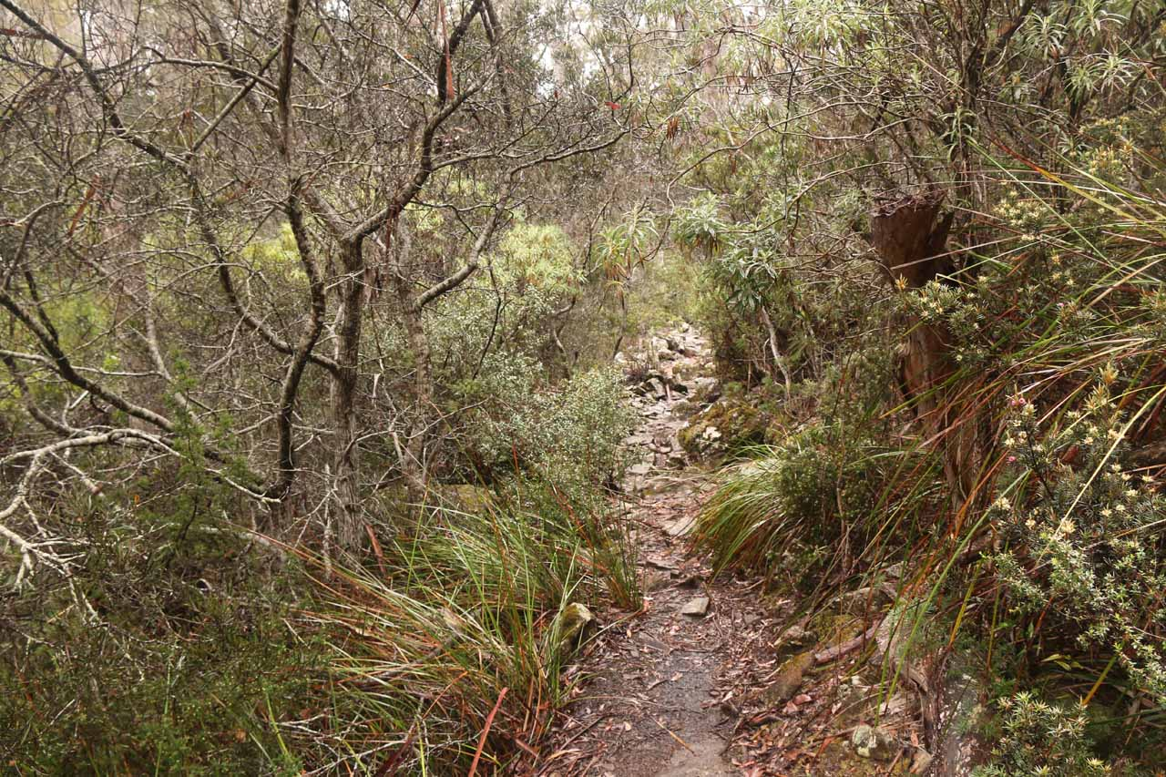 Following the narrow trail leading down to the Rock Pools