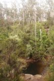 Lost_Falls_Tassie_049_11252017 - Context of one of the Rock Pools with surrounding trees as seen during my visit in November 2017