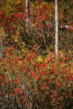 Lower_Bertha_Falls_036_09232010