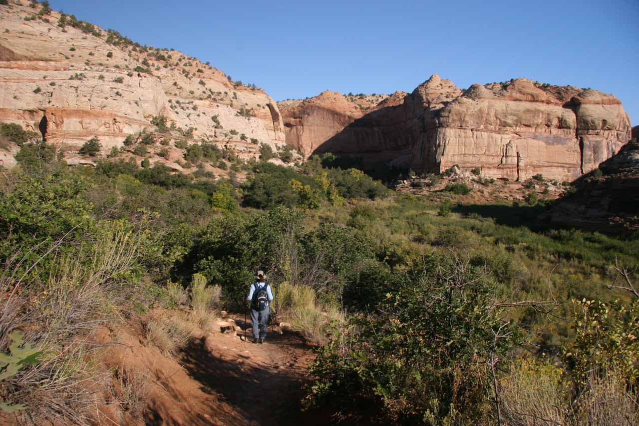 Mom hiking through a wide open but lush part of the trail before Calf Creek Canyon really started to close in