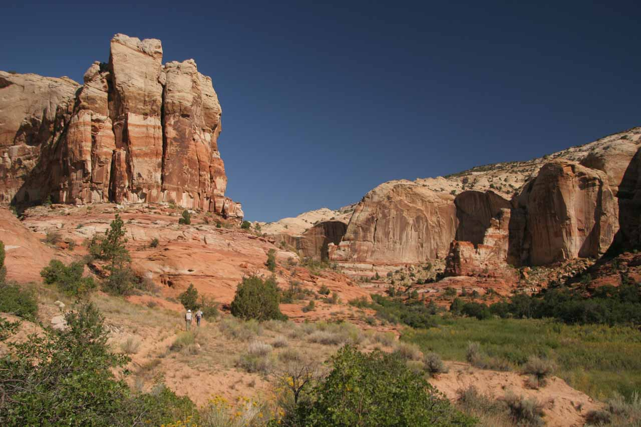 Gorgeous look at tall sandstone cliffs closing in on the canyon as we were well into the hike to Lower Calf Creek Falls