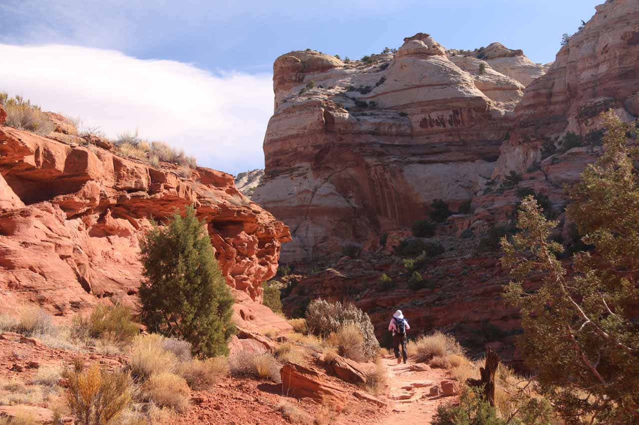 As we went further along the trail, the canyon walls started closing in gradually