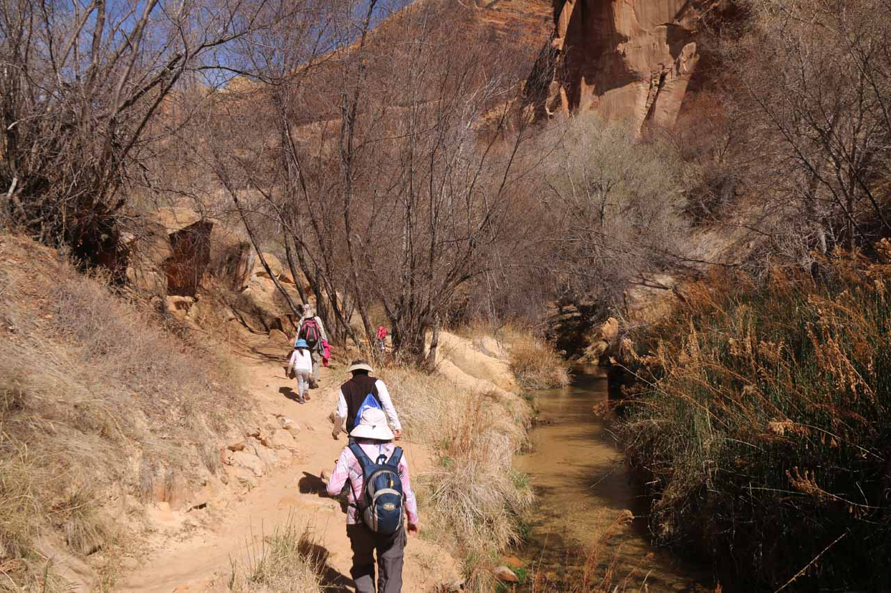 By this point, the canyon walls had closed in enough that the trail now skirted Calf Creek