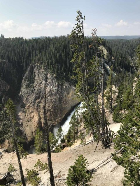 Lower_Falls_Yellowstone_005_iPhone_08102017 - Looking down at the Lower Falls in the distance from the closure point of the trail leading down to the waterfall's brink