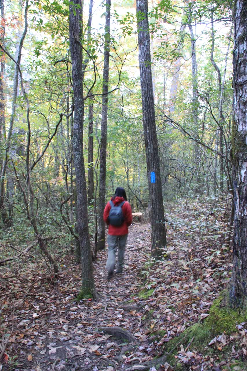 Following blue hashes within the initial forested part of the trail