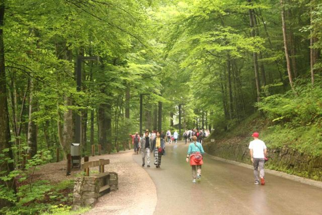 Ludwigs_Castles_161_06252018 - Despite the physical demands of doing the walk up to the Neuschwanstein Castle, it was still very busy