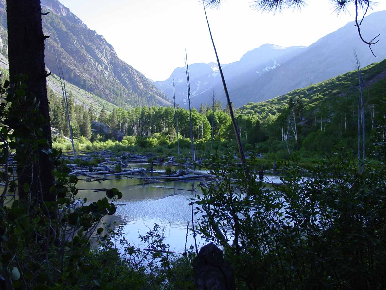 Looking over some swampy pond in the direction of Lundy Canyon near the trailhead