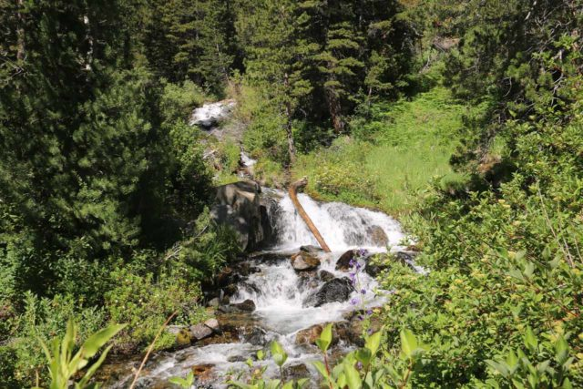 Lundy_Canyon_131_07112016 - Looking towards a mostly hidden cascade on Mill Creek that I considered to be the second 'major' Lundy Canyon Waterfall