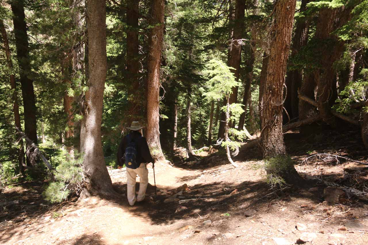 Dad descending the steep forested trail near the third waterfall on Mill Creek
