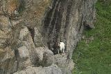 Lysefjord_cruise_192_06212019 - A goat clinging to a cliff while cruising the Lysefjorden