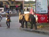 Mae_Sot_027_jx_01012009 - A local with an elephant