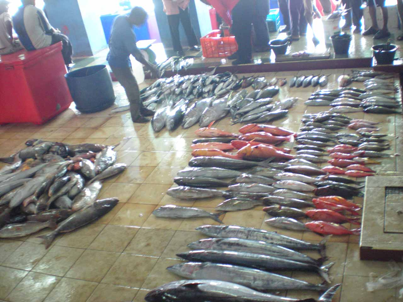 Lots of huge catches on the floor of the fish market in Male