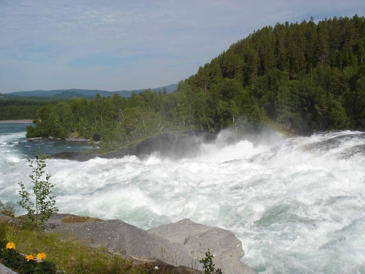 Looking a little further downstream from Målselvfossen