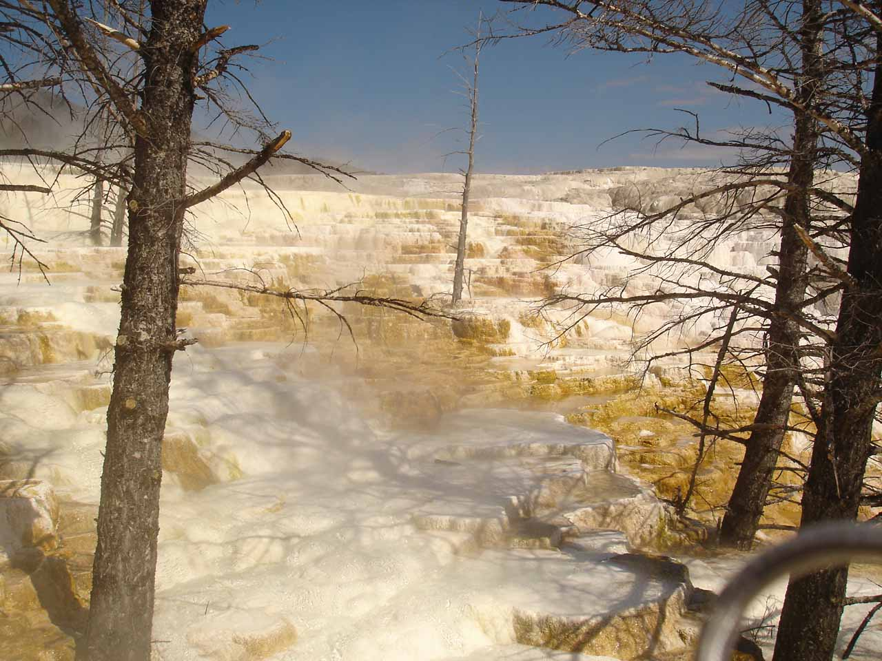 Osprey Falls was near Mammoth Hot Springs where we saw a few active springs like this one called Canary Spring