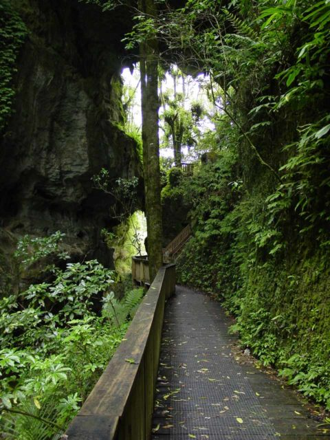 Mangapohue_Natural_Bridge_006_11192004