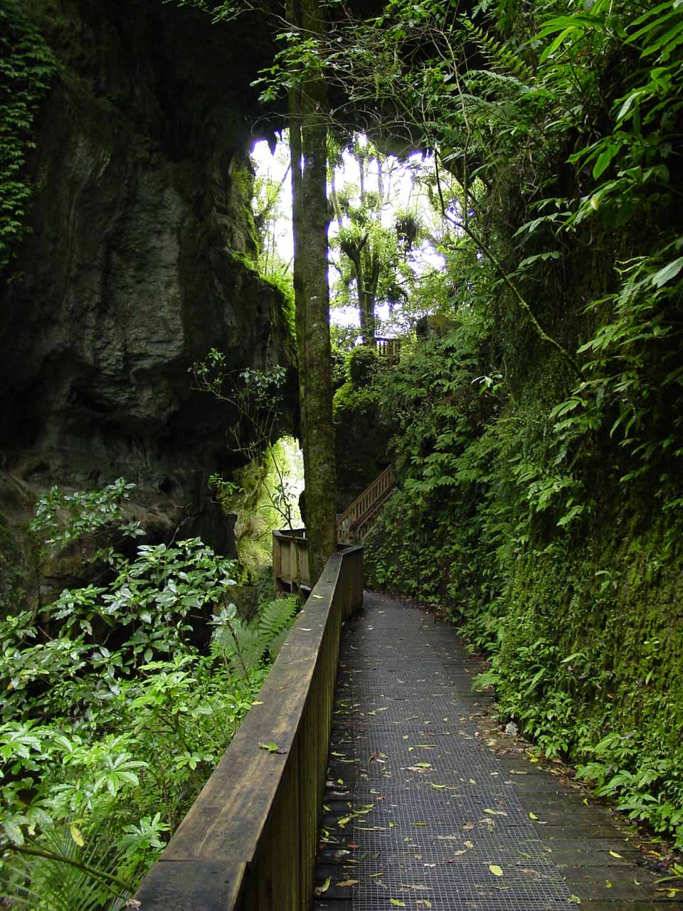 On the way to Marokopa Falls, we checked out the intriguing Mangapohue Natural Bridge, which was a collapsed cave that left behind a natural bridge instead