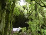 Mangapohue_Natural_Bridge_021_11192004