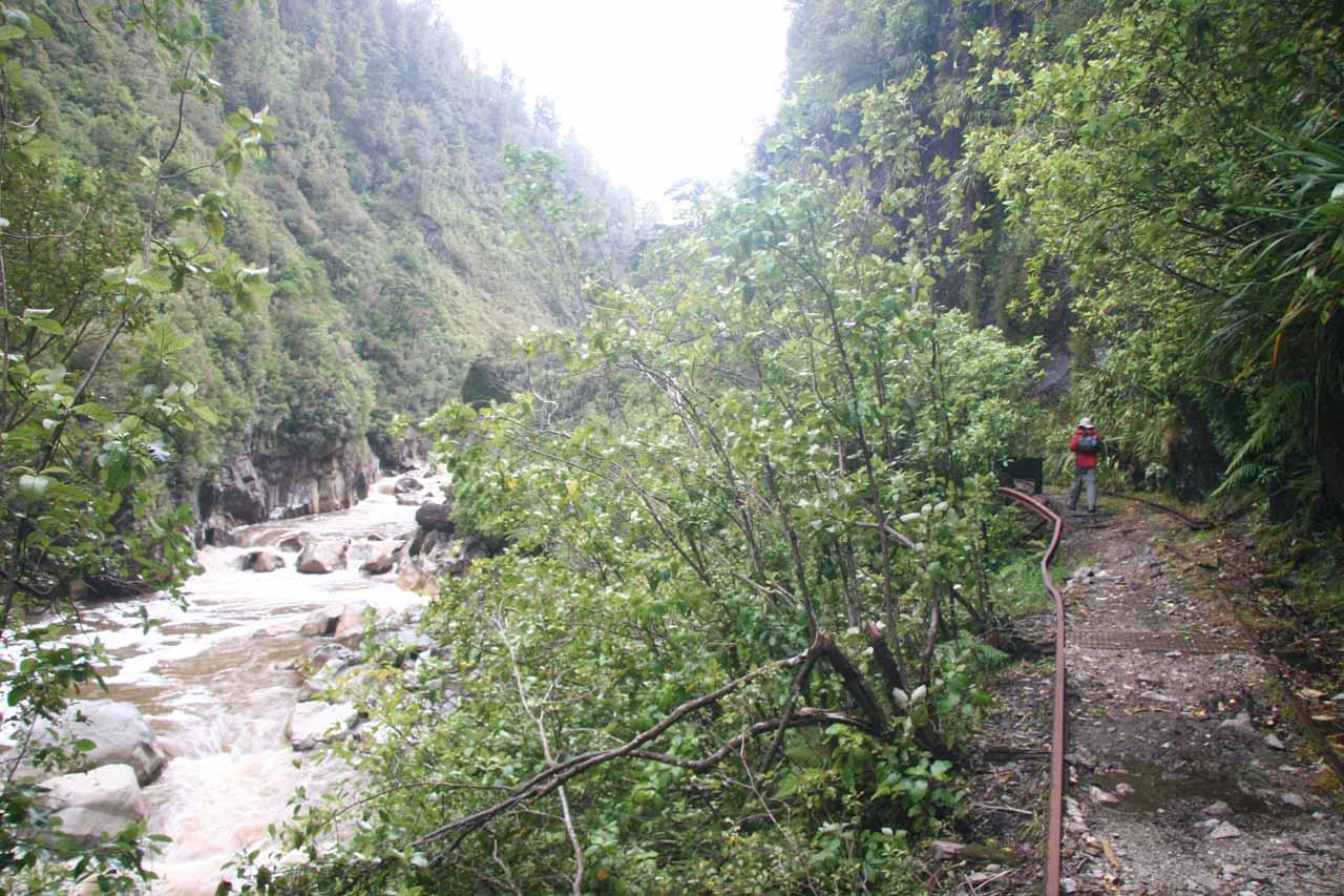 The Charming Creek Walkway was following along the raging Ngakawau River
