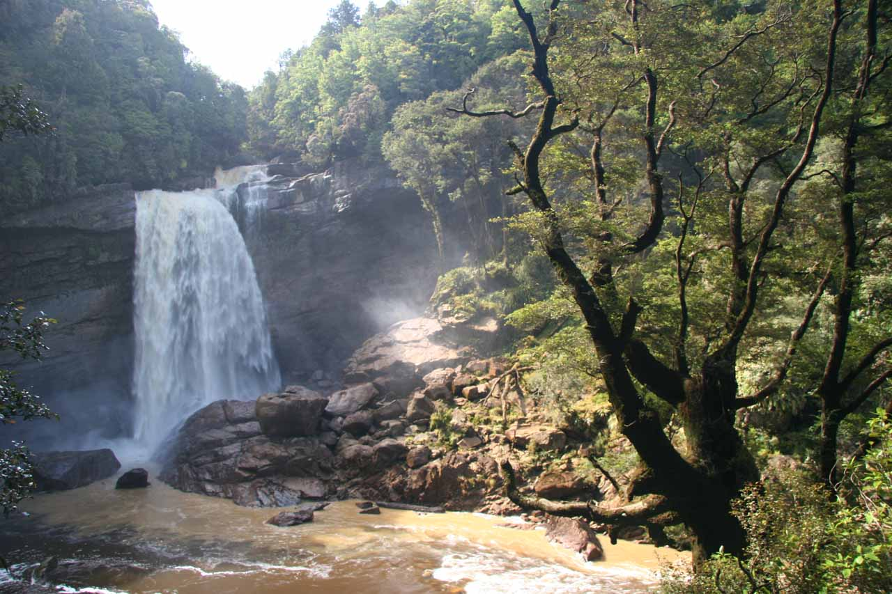 Another look at Mangatini Falls and an intriguing tree