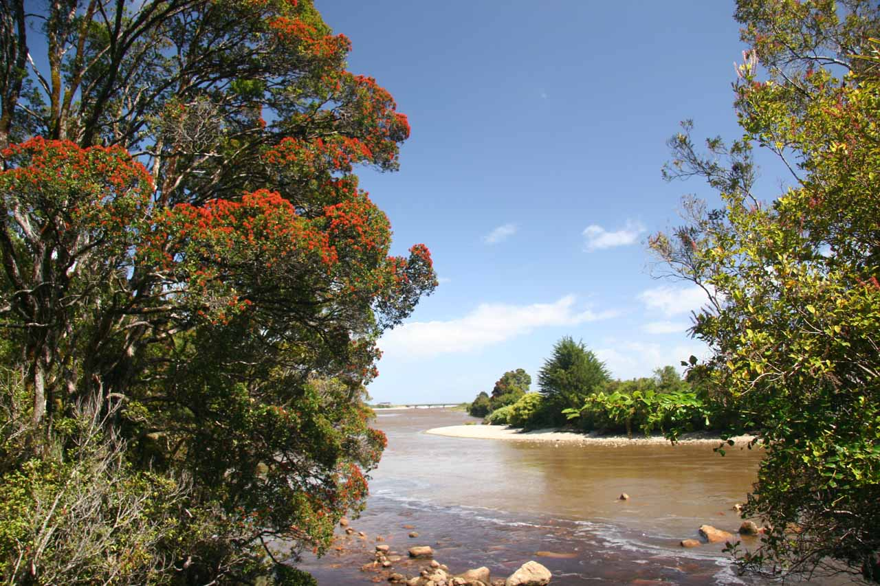 Looking out towards the mouth of the Ngakawau River with some attractive blooming native flora along the Charming Creek Walkway