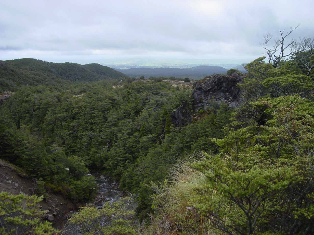 Looking downslope from the lookout for Mangawhero Falls
