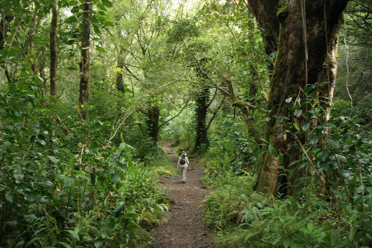 Hiking in lush jungle