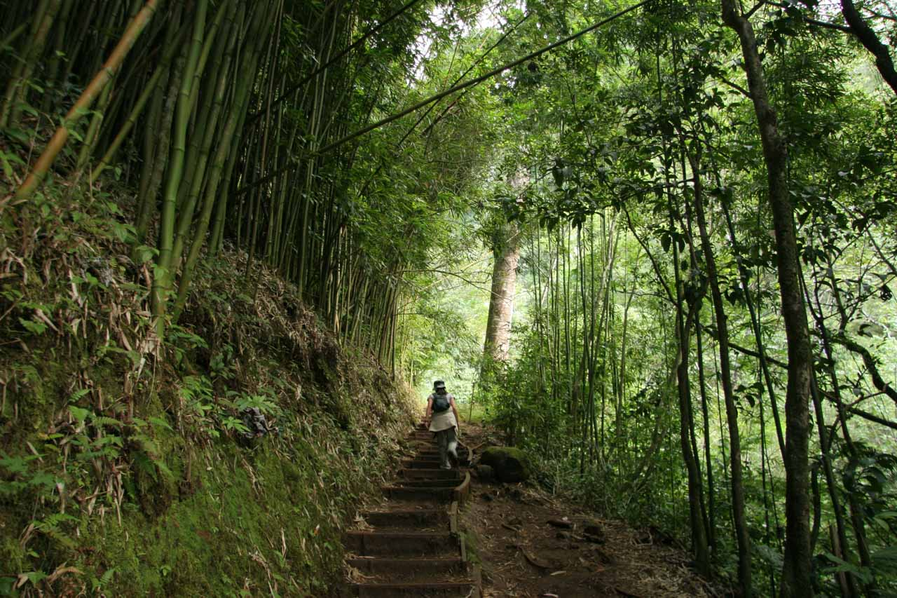 Going up some stairs flanked by bamboo shoots
