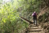 Maolin_Valey_Waterfall_020_10292016 - Mom following the uphill path flanked by bamboo stalks en route to the Maolin Valley Waterfall