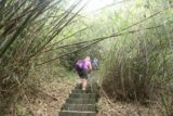 Maolin_Valey_Waterfall_060_10292016 - Mom continuing the fairly long hike up amongst the bamboo stalks on the way up to the Maolin Valley Waterfall