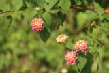 Maolin_Valey_Waterfall_115_10292016 - Mom and I were surprised to see wildflowers blooming this late in the Autumn season
