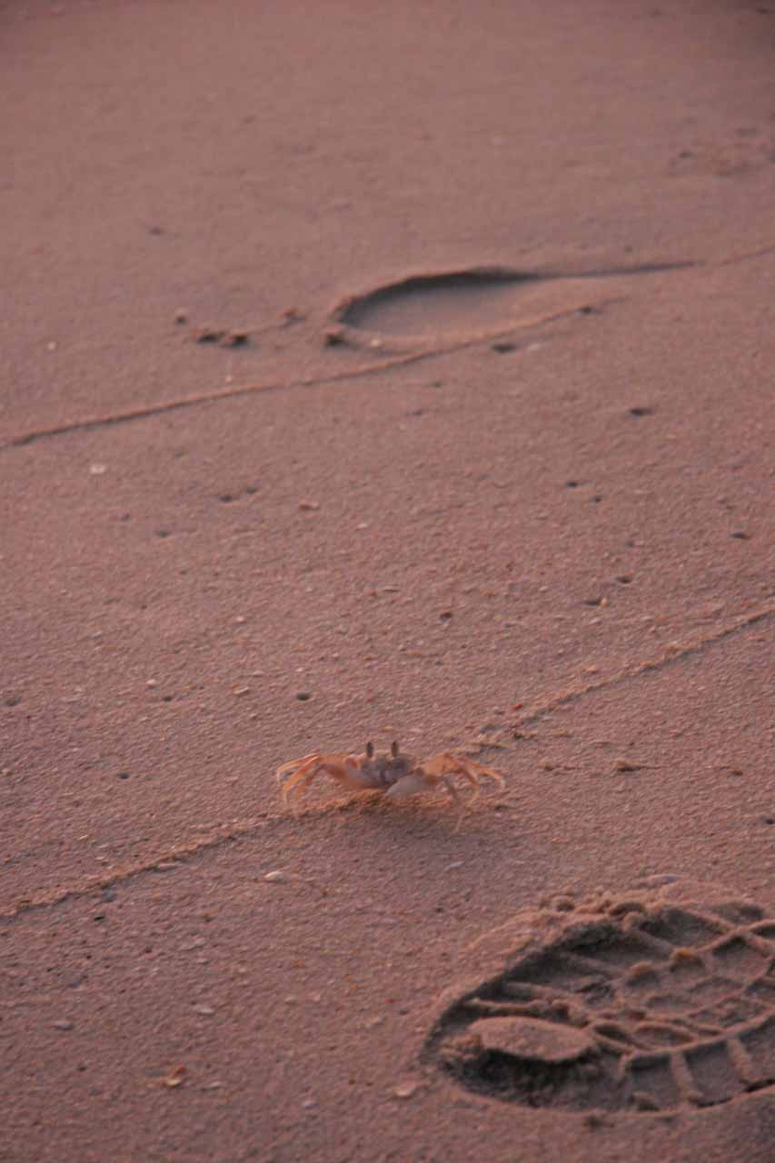Crab coming out of the sand