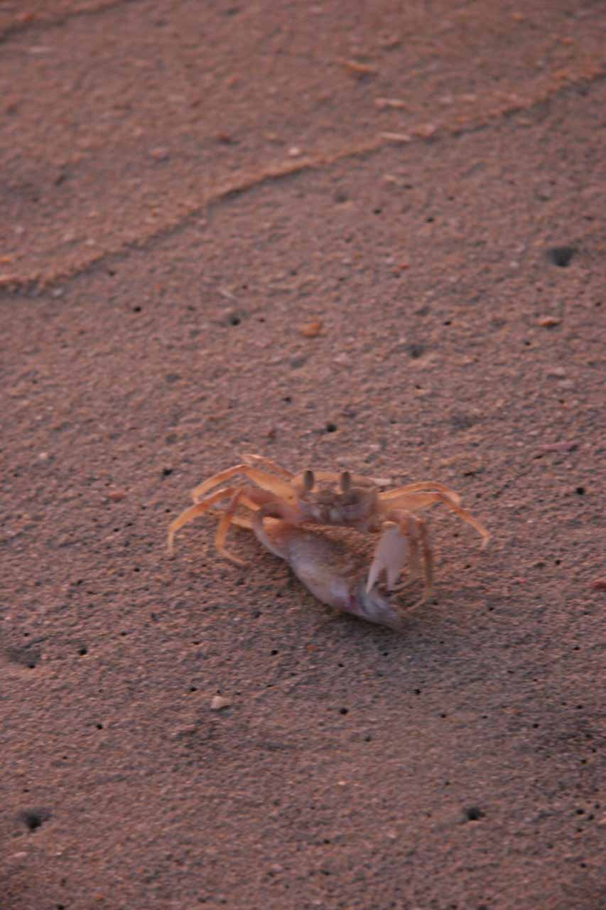 Closeup of a crab that came out of its hole