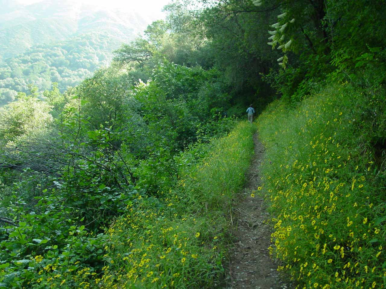 Mom walking through narrow trail flanked by lots of wildflowers as well as tick-prone foliage