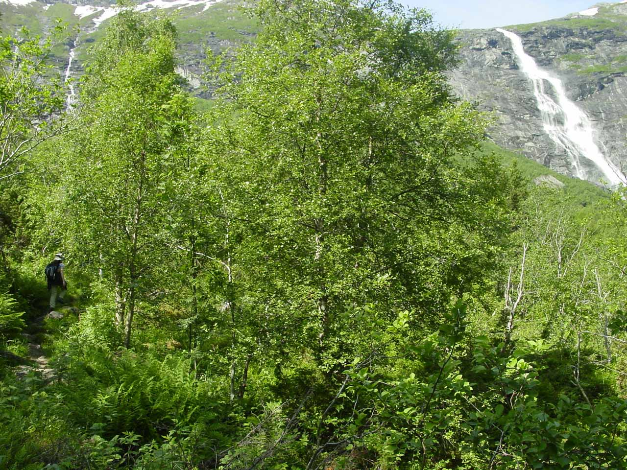 Julie and I started to notice this other waterfall on the Mardalsfossen trail, which we think was on the Ytste Mardøla watercourse