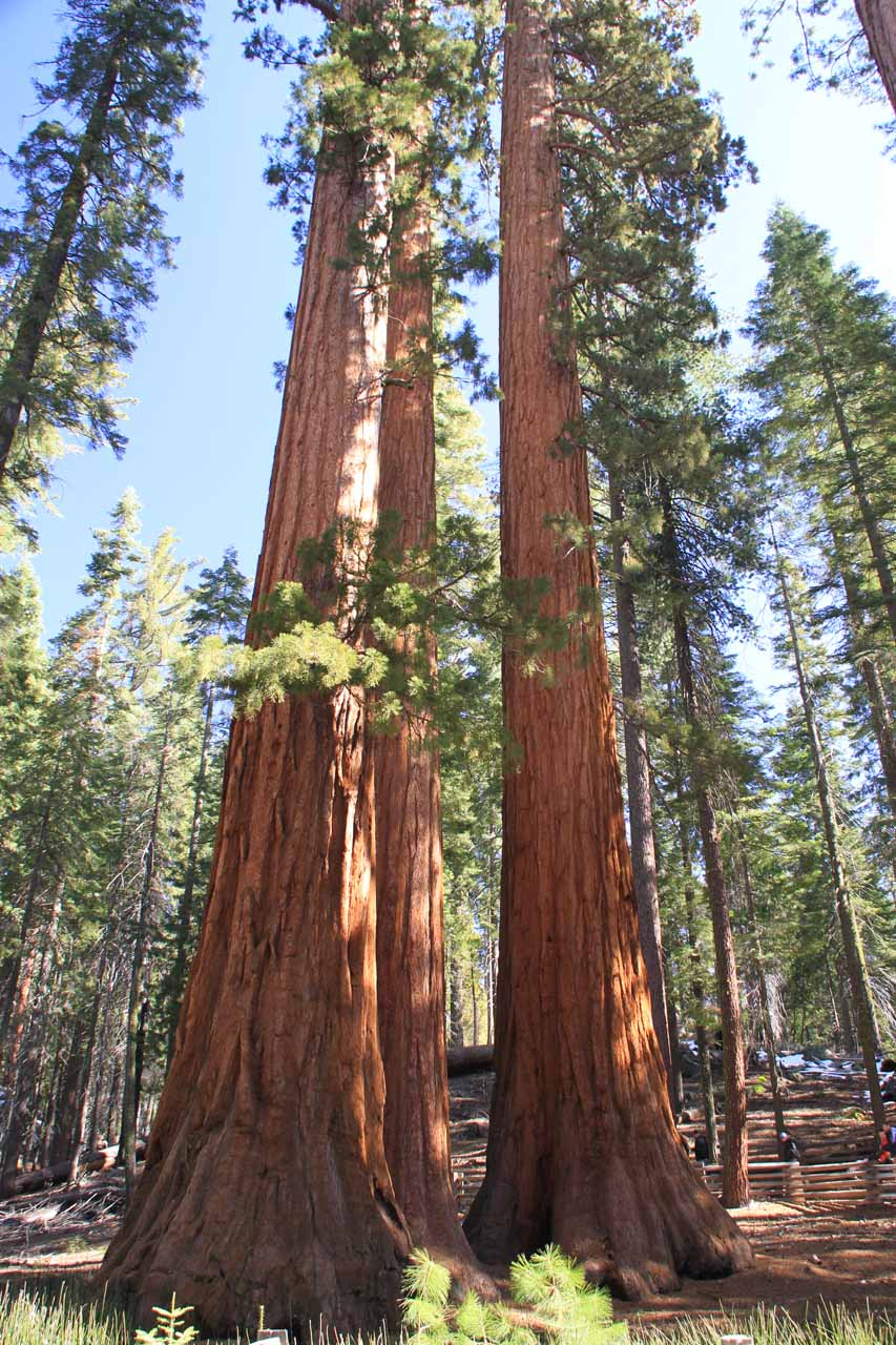 Both Bass Lake and Oakhurst were not far from the Yosemite National Park South Entrance, where it was possible to visit the nearby Mariposa Grove of giant redwood trees