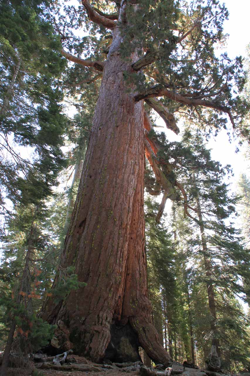 Just a short distance south of Wawona was both the South Entrance as well as the Mariposa Grove of Big Trees. We did a hike to the Grizzly Giant, which is shown here