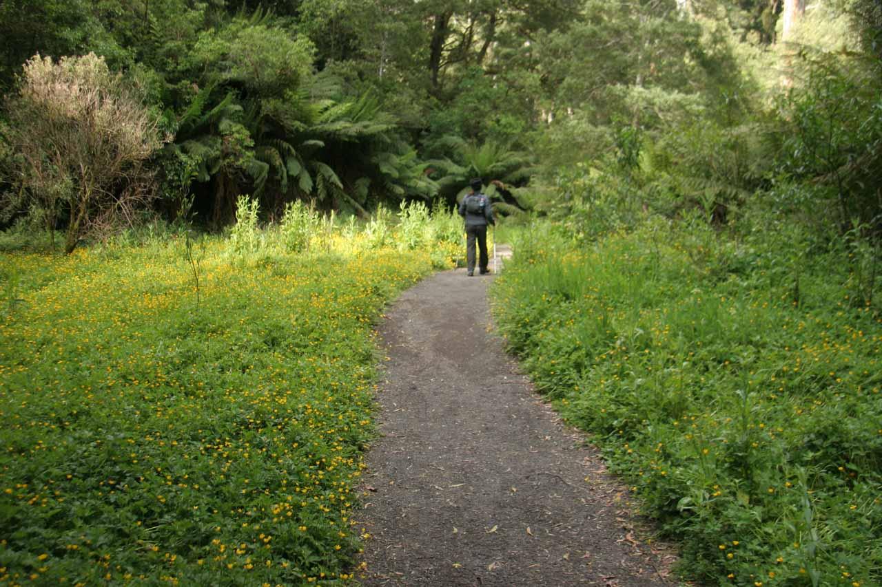 Heaps of flowers in bloom alongside the trail