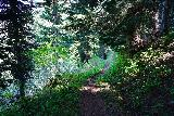 Martha_Falls_012_06212021 - Following the Wonderland Trail as it narrowed its way down towards Martha Falls